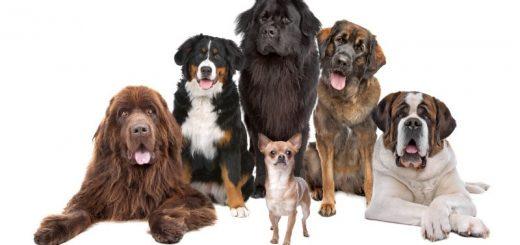 Dermatomyositis Hund
